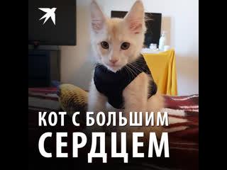 Кот с большим сердцем