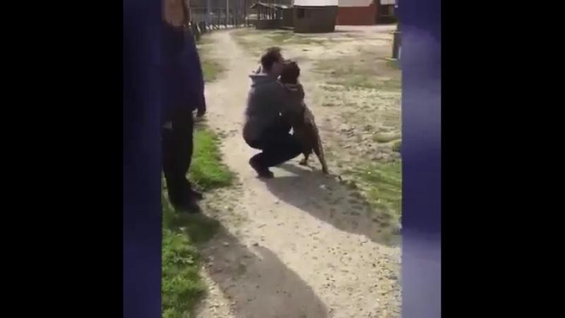 Хозяин 2 года искал своего пса не терял надежды и нашёл Вот она долгожданная встреча…