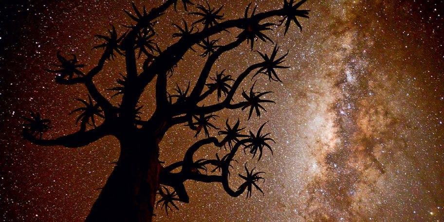(Дерево Фредди Крюгера) Фото: Энрике Лопес-Тапия