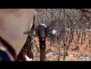 Assassins Creed III Lindsey Stirling