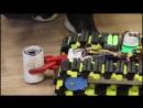 Юные робототехники Анапы победили на ВДНХ
