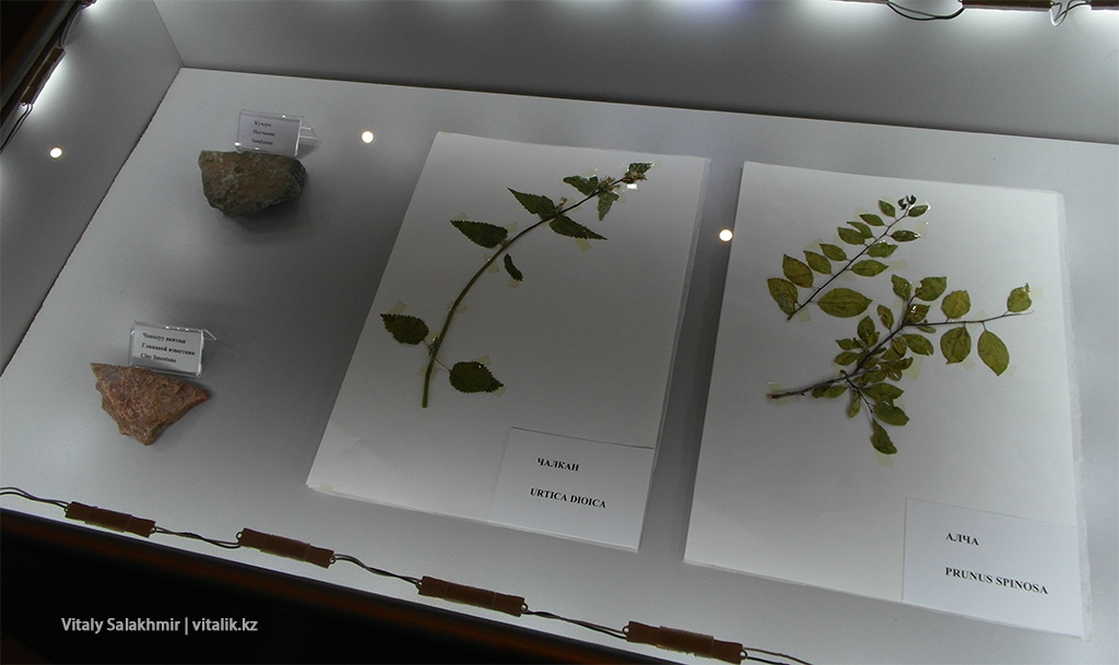 Растения Сулайман Тоо, выставка Рух Ордо