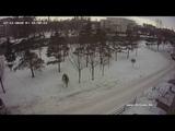 Онлайн веб камера - Астана - Видеонаблюдение ДТЛ Novicam - Online web camera Astana