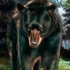 Сибирское сообщество Медведи(игровое)