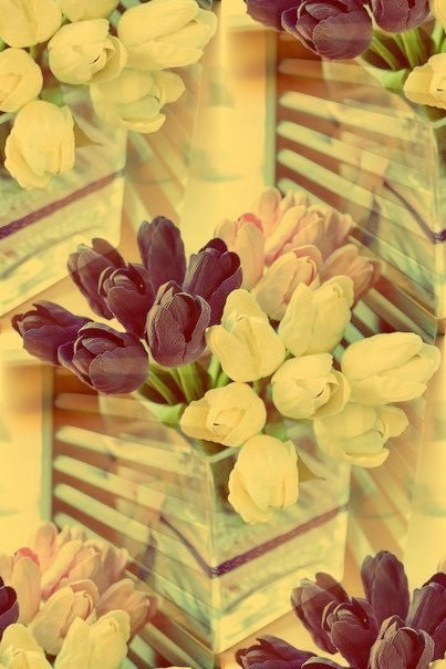 Цветочные и растительные фоны - Страница 3 AKTbsEtxUDc