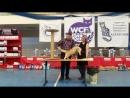 26 27 03 16г Выставка WCF Mонопородный ринг шотландских фолдов и срайтов Лафрой Плюш SS Best adult SS Best of Breed
