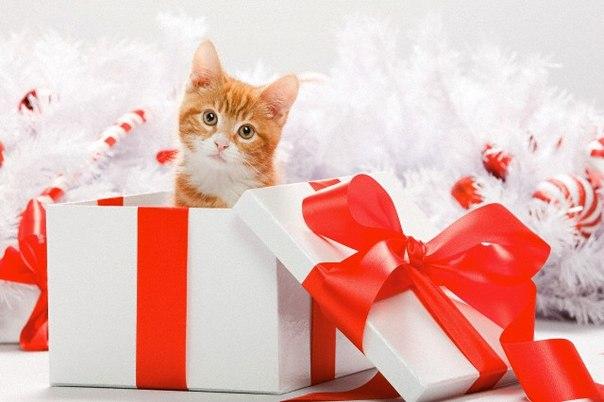 Коти - игрушка мягкая кошка ручной работы в подарок