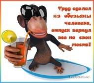 отпуск, труд сделал из обезьяны человека отпуск вернул все обратно, коктейль, курорт, отдых, море, пляж, лето