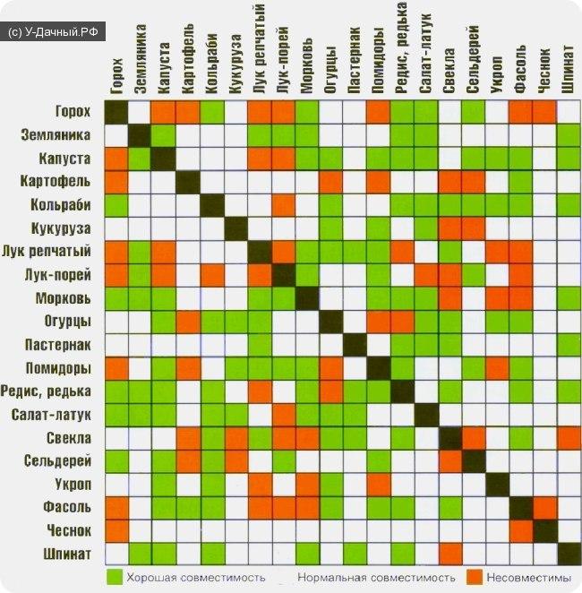 рекомендации по правильному выбору продуктов питания