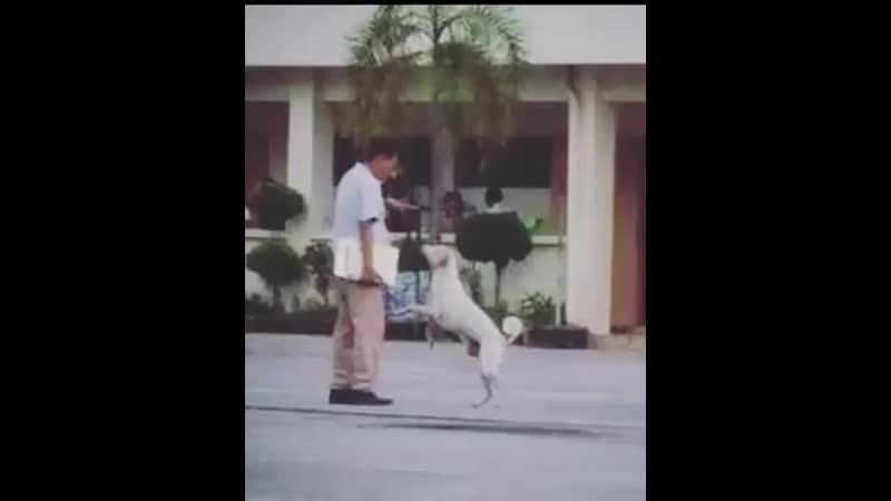 Anjing hewan paling setia seperti kisah HACHIKO.mp4