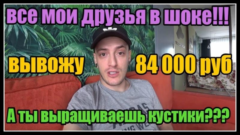 ВЫВОЖУ 84000 РУБЛЕЙ ЭКОНОМИЧЕСКАЯ ИГРА С ВЫВОДОМ ДЕНЕГ ГОЛДЕН ТИА   GOLDEN TEA