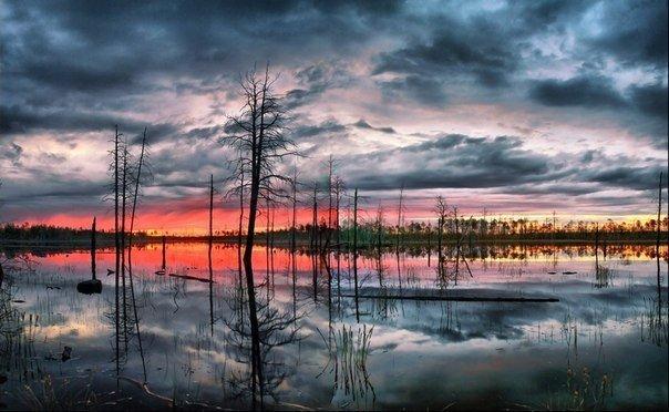 Васюганские болота, Томская область, Россия