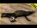 Смешные коты и котята 2019 Видео про котов с озвучкой - Приколы с котами