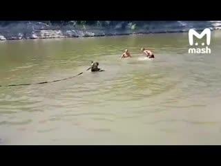 Жительница урюпинска пришла на городской пляж с медведем на поводке