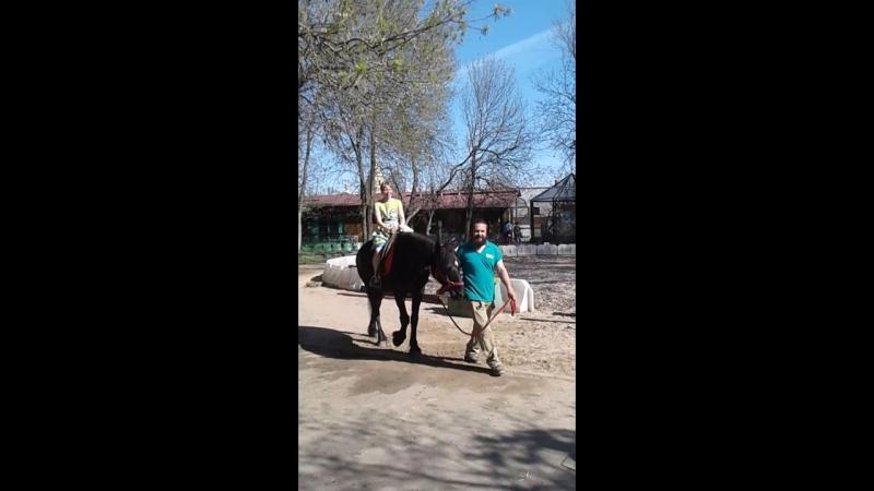 зоопарк катание на лошади