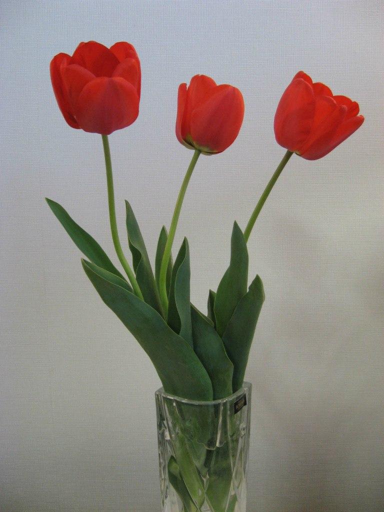 зодиак - Магия растений. Магические свойства растений. Обряды и ритуалы. Амулеты и талисманы из растений.  ZOOqSwSYPm4