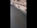 Video-59ff222a4647a8b8ccf5e2af55bf8e44-