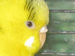 Здоровье птиц: болезни лечение их и