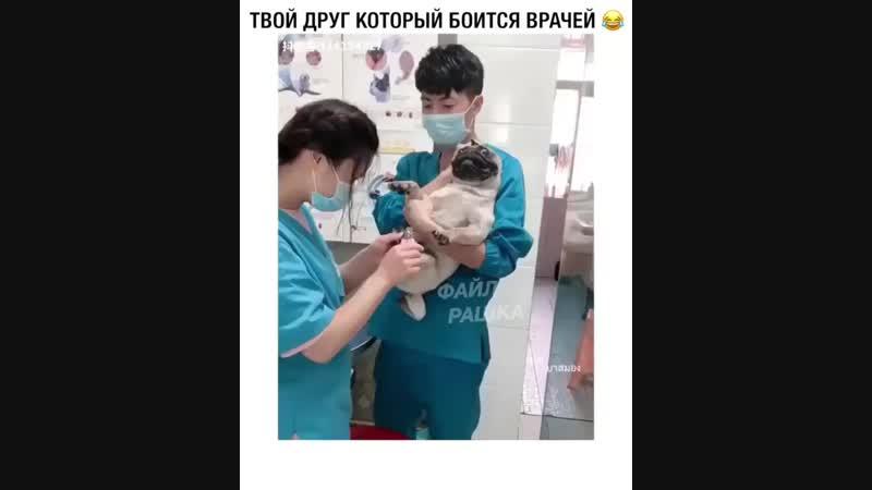 Когда твой друг боится врачей