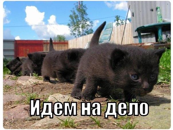 Кошачий юмор - Страница 8 8_UVxtd8P6s