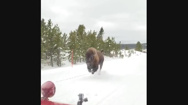 An absolute UNIT galloping