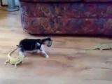 Котёнок и ящерицы | Kitten and lizards