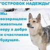 """АНО""""ОСТРОВОК НАДЕЖДЫ""""помощь животным.Архангельск"""