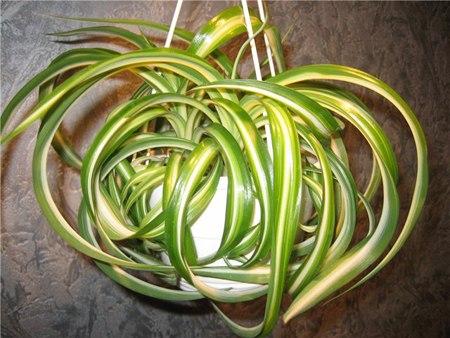 чернаямагия - Магия растений. Магические свойства растений. Обряды и ритуалы. Амулеты и талисманы из растений.  UXw64oVfCjI