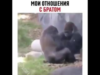 Рас па 😂