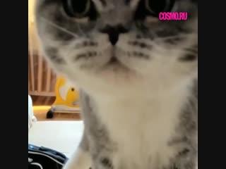 Крадущийся тигр, затаившийся котенок