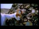 Ozcan Deniz – Don desem