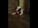 COLLAR LIKER игрушка для собак отлично разминает десна