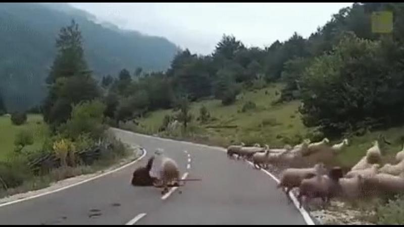 .🐏🐐🐑Просто стадо овец...