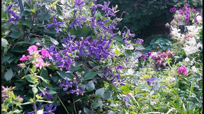 Вы не поверите! Я в саду Натальи Ивановой. Часть II. С фантазией и любовью .