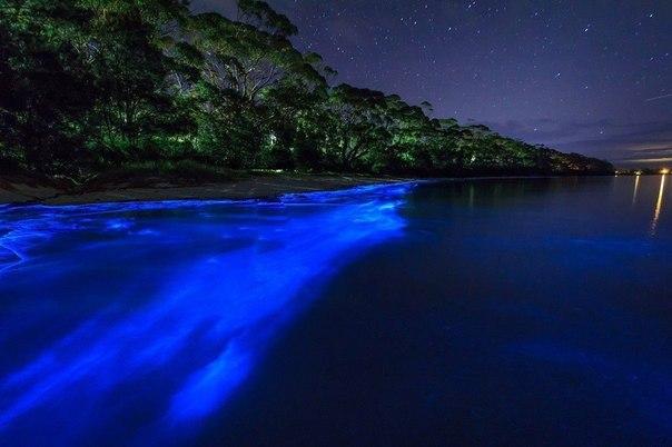 Светящийся планктон на пляже в