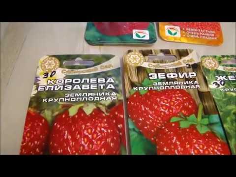 Барботирование семян крупноплодной земляники! Первые всходы петунии!
