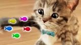 Lindo Gatito Solo en Casa - Little Kitten Alone at Home - Dibujos Animados Infantiles Colores Juegos