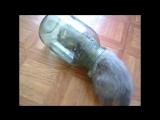 Смешные кошки приколы про кошек и котов 2017 #14 (Продолжаем смеяться с котиков)