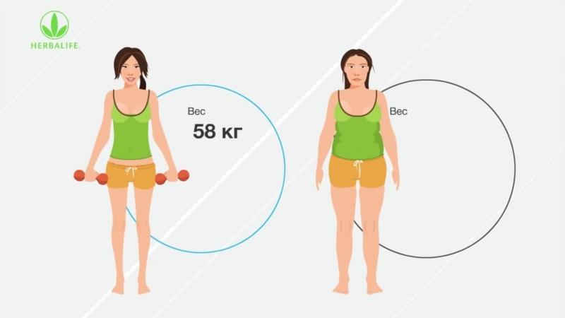 Белок - основа сбалансированного питания человека
