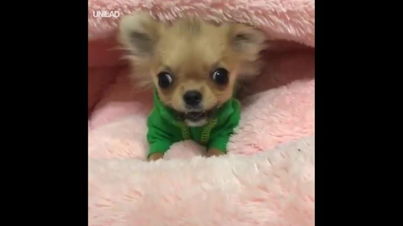 Осторожно злая собака!
