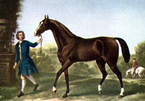 Знаменитый арабский жеребец по кличке Darle], завезённый в Англию в XVIII веке