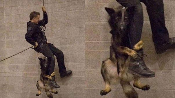 Тренировка полицейских собак в Ванкувере