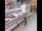 Котик просит мяса