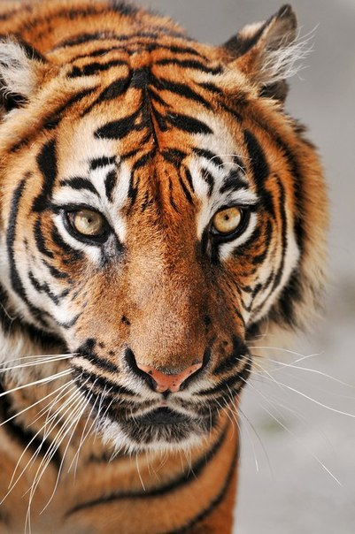 У животных есть душа. Я видел это в их глазах. (с) Жизнь Пи