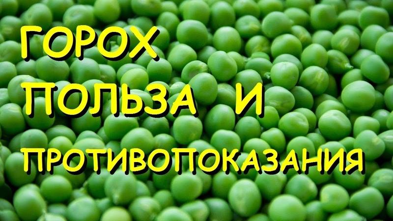 KhimkiQuiz 11.01.19 Вопрос№35 В литовском языке ОН называется zirnis - словом, родственным нашему зерну.