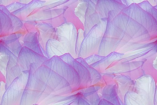 Цветочные и растительные фоны - Страница 2 83twdy8c2w0