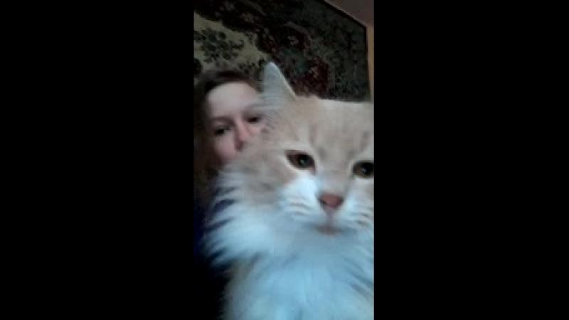 мой любимый котик ВАСЯ😍