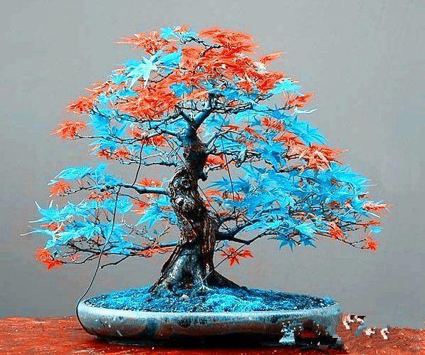 Семена дерева бонсай Много положительных отзывов