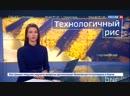 В Дагестане заработал уникальный завод по переработке риса - Россия 24