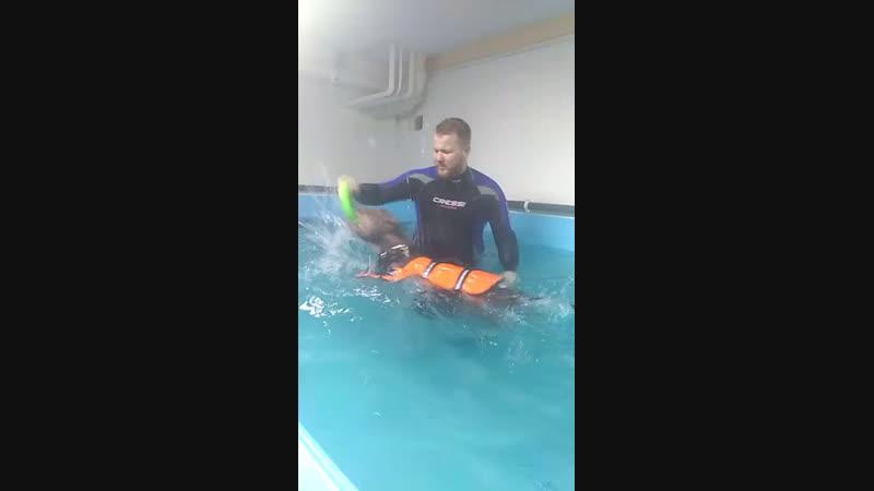 дастин плавает